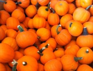 reesors-pumpkins02