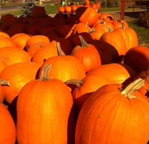 reesors-pumpkins03