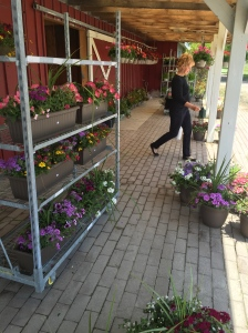 reesors-hanging-baskets-02