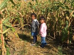 reesors-corn-maze01