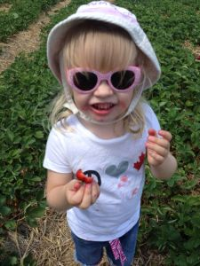 reesors-pick-your-own-strawberries
