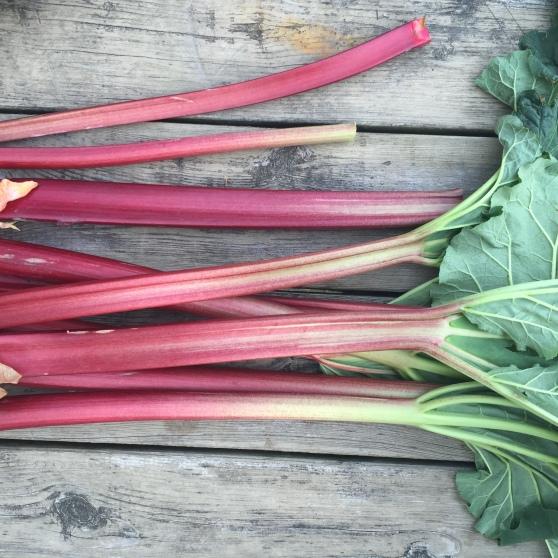reesors-rhubarb-pie-03