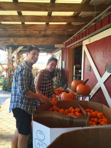reesors-pumpkins-04